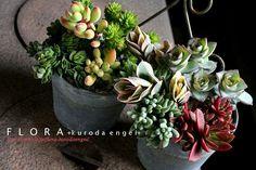 フローラのガーデニング・園芸作業日記-多肉植物 寄せ植え