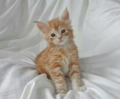 Cute kitten! Love that face!