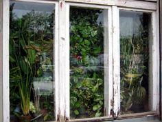 Mygreentown Urban Gardening Berlin - Garten - Stadtgarten - Blog - Window Farm http://www.mygreentown.de/blog/