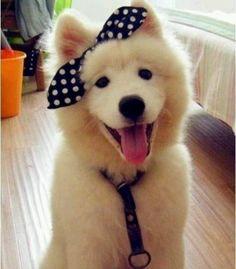 Totally way too cute! :) <3
