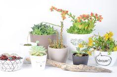 Blumentopf DIY - Porzellanmalerei - Ein neuer Platz für meine Sukkulenten