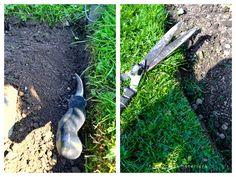 Hometalk :: How to edge flower beds... like a pro!
