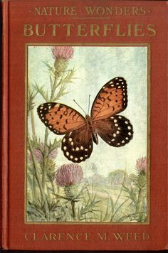Gardening In The City Butterflies.Clarence M. (I have started a new book cover board now) Book Cover Art, Book Cover Design, Book Art, Types Of Butterflies, Flying Flowers, Beautiful Butterflies, Illustration Art Nouveau, Book Illustration, Vintage Book Covers