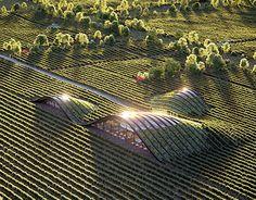 Resultado de imagen de Shilda winery in Kakheti, Georgia.