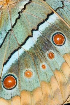 Butterfly wing close-up, by Darell Gulin