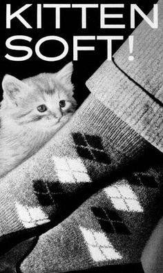 Kitten Soft!