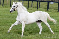 Tapit...one of my favorites.                                                                                                                                                                                 More