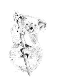 Koala bear by www.illustratemyday.com