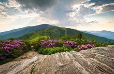 Rhododendron Bloom on Blue Ridge Appalachian Trail Roan Mountains Peaks scenic landscape