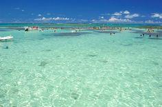 Piscinas naturais - Maragogi - Alagoas