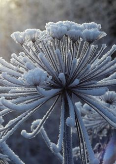 kuva Topiary Trees, Winter Beauty, Wild Nature, Aesthetic Pictures, Dandelion, Landscape, Garden, Flowers, Plants