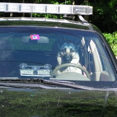 Police dog at your service.....