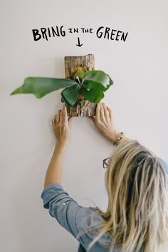 Indoor Gardening Garden DIY: Mounting a Staghorn Fern - Last Summer we began chatting about the garden and many of you shared that you loved the posts, but lived in a space where a large garden was not possible. We will bring the green into your home du… Air Plants, Garden Plants, Indoor Plants, Cactus Planta, Plant Wall, My New Room, Garden Projects, Diy Projects, The Fresh