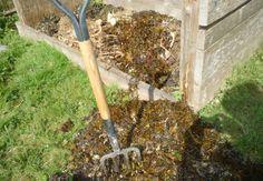 seaweed mulch