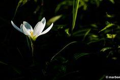 写真 白い花 輝いて