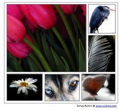 Vintimo Fine Art Photography @ www.vintimo.com