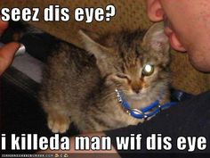 Google Image Result for http://icanhascheezburger.wordpress.com/files/2009/05/funny-pictures-kitten-kills-with-his-eye.jpg