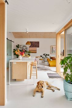 Interior Stylist's Colourful Barwon Heads Abode Frankie the lab is looking pretty smug about her swanky new beach side pad. Colours used are Haymes Greyology 1 and Haymes Pitch Pine. Home by Photography by Interior Design Inspiration, Home Decor Inspiration, Home Interior Design, Interior Architecture, Interior Decorating, Interior Stylist, Interior Ideas, Decorating Tips, Easy Home Decor