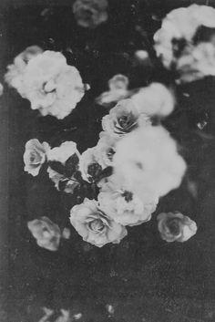 Dark roses.