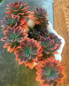 35 Easy DIY Backyard Landscaping On A Budget www.onechitecture… 35 Easy DIY Backyard Landscaping On A Budget www. Succulent Landscaping, Succulent Gardening, Cacti And Succulents, Planting Succulents, Container Gardening, Garden Plants, Garden Landscaping, House Plants, Planting Flowers