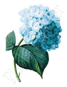 BLUE HYDRANGEA Digital Download Large Digital by PixelsTransfer, $3.50