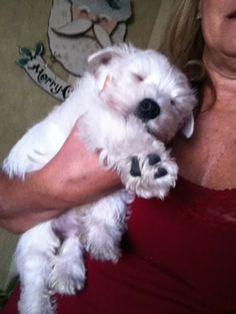 Sweet baby Barkley!
