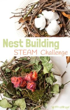 Make A Birds Nest STEAM project is a fun way to challenge your kids and get them testing out their ideas and problem solving. Can you build a nest using natural materials just like real birds do? No glue or tape allowed! #kidscraftroom #STEM #STEAM #Easter #eastercrafts #easteractivities #kidscrafts #springcrafts Forest School Activities, Nature Activities, Steam Activities, Easter Activities, Spring Activities, Preschool Ideas, Preschool Science, Science Activities, Library Activities