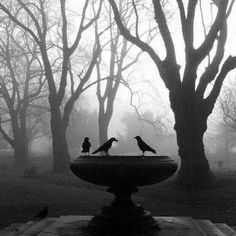 I can almost smell the morning: freezing cold, silent birds, fresh air...