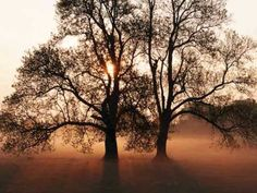 The Rolling Stones - Wild Horses Tai Chi, Super Sonico, Photoshop, Foggy Morning, Morning Light, Early Morning, Morning Sunrise, Morning Dew, Big Tree