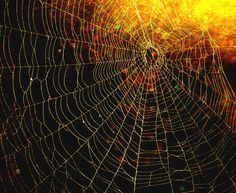 Beautiful Spider Webs | Spider and Spider Web Project 498 | Flickr - Photo Sharing!