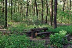 Old Wooden Resting Place-two-benches-and-table-in-the-summer-forest