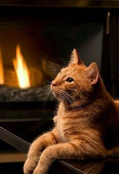 Tabby Cats Reminds me of my sweet boy. (Beautiful orange tabby cat by the fire) I Love Cats, Crazy Cats, Cool Cats, Pretty Cats, Beautiful Cats, Beautiful Life, Beautiful Images, Kittens Cutest, Cats And Kittens