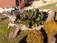 Driftwood garden bed
