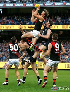 Buy official AFL prints of your favourite AFL players and AFL moments Essendon Football Club, Australian Football League, Stephen Curry, Rugby, Muscles, The Twenties, Photo Galleries, Blues, Soccer