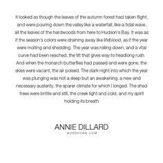 Annie dillard essay seeing summary