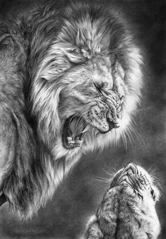 Lion print featuring the drawing heat of the night by peter williams pencil drawings of animals Lion Tattoo Sleeves, Sleeve Tattoos, Lion Africa, Pencil Drawings Of Animals, Drawing Animals, Lion Drawing, Lion Wallpaper, Lion Print, Lion Pictures