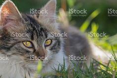 Kitten in the garden – fotografía de stock libre de derechos