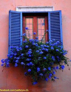 Pretty in blue.. window box