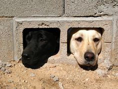 """White Dog: """"Did you see that?"""" - Black Dog: """"See what?"""""""