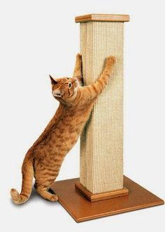 Extra Large Cat Scratching Post