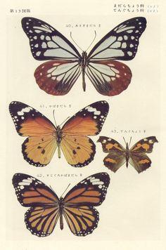 papillon 13 by pilllpat Butterfly Illustration, Butterfly Drawing, Botanical Illustration, Botanical Prints, Vintage Butterfly, Beautiful Butterflies, Cute Wallpapers, Art Inspo, Decoupage