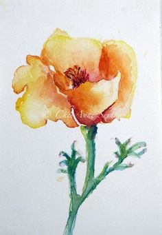 watercolor California Poppy blossom   by CheyAnneSexton