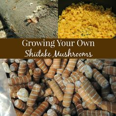 Growing Your Own Shiitake Mushrooms! Doesn't seem too hard, just have to make sure you have a nice shady spot for the logs. Grow Your Own Mushrooms, Growing Mushrooms At Home, Garden Mushrooms, Edible Mushrooms, Stuffed Mushrooms, Mushroom Spores, Mushroom Cultivation, Mushroom Kits, Mushroom Guide