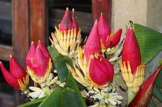 banana flower: 20 тыс изображений найдено в Яндекс.Картинках