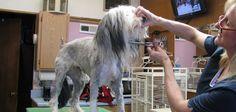 Benefits of Proper Dog Grooming Dog Grooming, Your Dog, Benefit, Pets, Animals, Animales, Animaux, Animal, Animais
