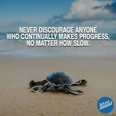 Turtle Quotes Custom Small Beginnings Big Things Motivation Turtles Quotes Wellness .