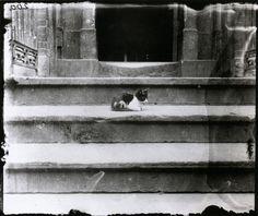 Jacob A. Riis  Cat on a Tenement Steps, New York, circa 1890s