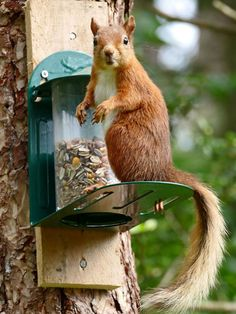 """Squirrel: """"What do you mean I can't help myself?! Well, that's just too bad, because I am going to!"""""""