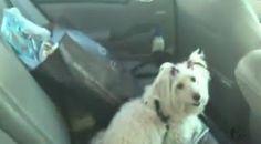 """""""O Grito do Bicho"""": Advogado é levado à delegacia após deixar cadela p..."""