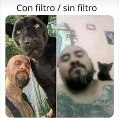 Top Memes, Memes Humor, Best Memes, Jokes, Funny Spanish Memes, Spanish Humor, Stupid Funny Memes, Funny Animal Pictures, Funny Animals